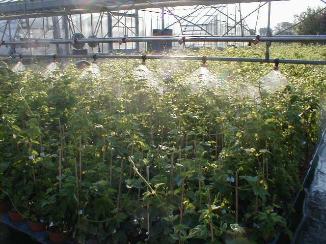 Kletterbogen Pflanzen : Hopfen onlineshop für hopfenjungpflanzen shop 1a garten